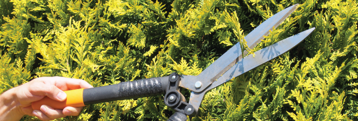 There's still time to trim your trees before Spring!