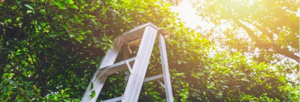 How to choose the best ladder for your garden project