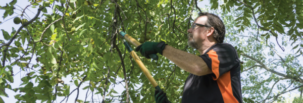 4 top tips on working safely while trimming your garden's trees