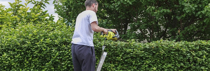 spring cleaning with ladders clearing out gardens and lofts feature image